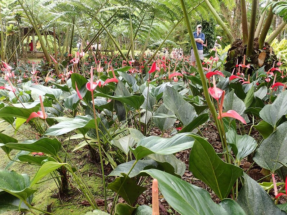 Le jardin de balata un v ritable tr sor bl for Horticulteur paysagiste